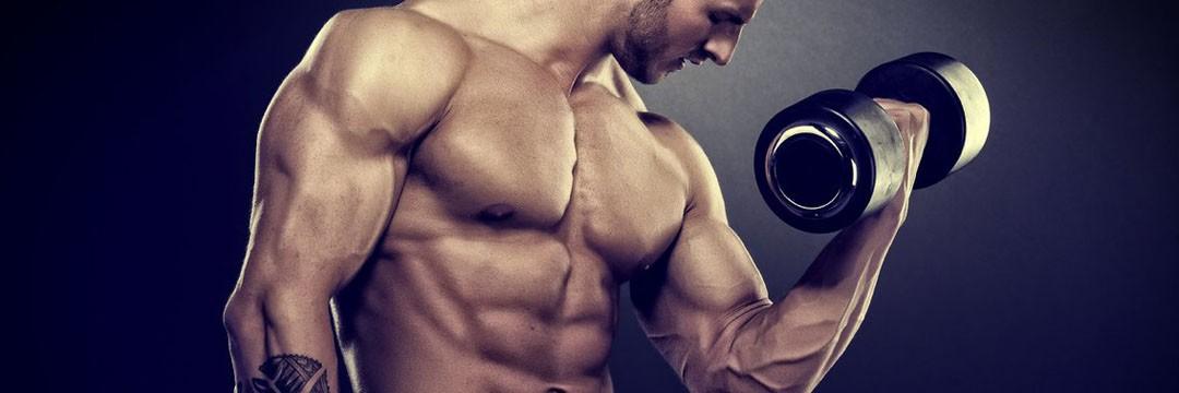 Mass Gain » Программа тренировок для начинающих