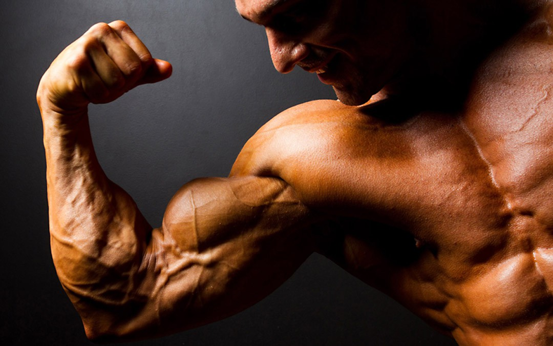 Mass Gain » The program for ectomorphs