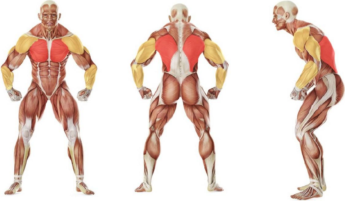 Какие мышцы работают в упражнении Брасс
