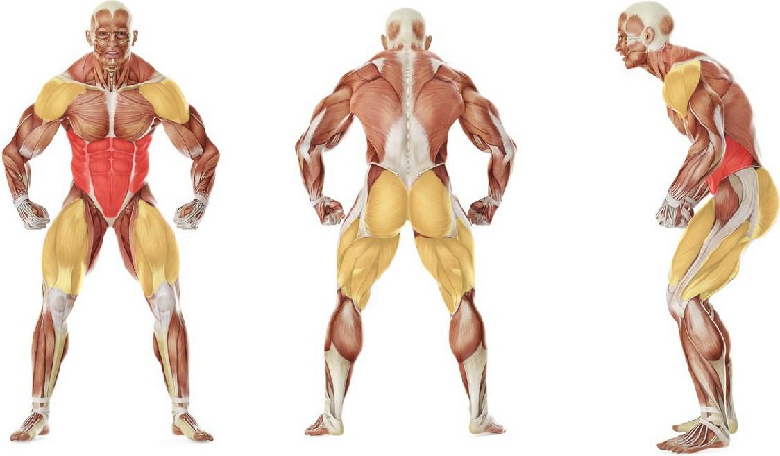 Какие мышцы работают в упражнении W - вариант восьмерок с гирей