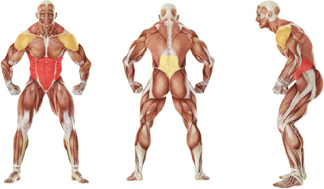 What muscles work in the exercise Barbell Ab Rollout - On Knees