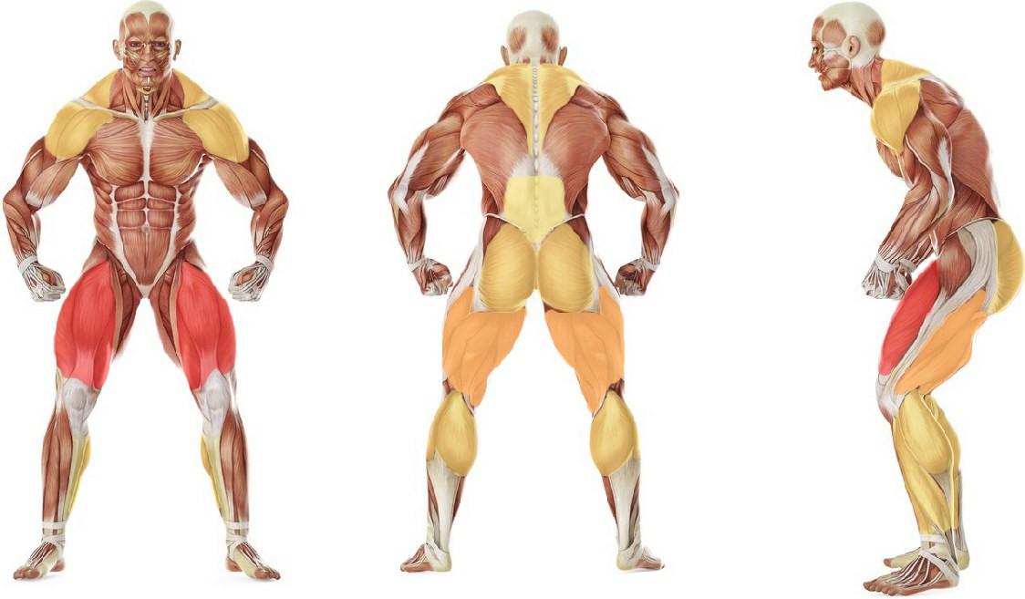 Какие мышцы работают в упражнении Подъем штанги на грудь (с подставок)