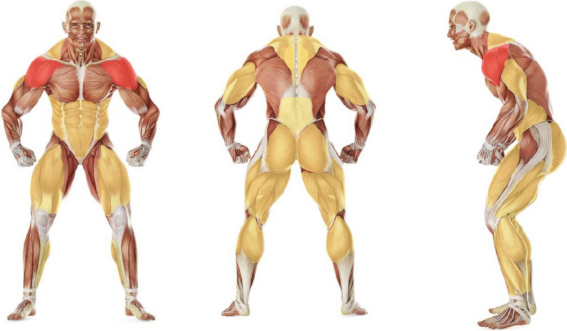 What muscles work in the exercise Clean and Press