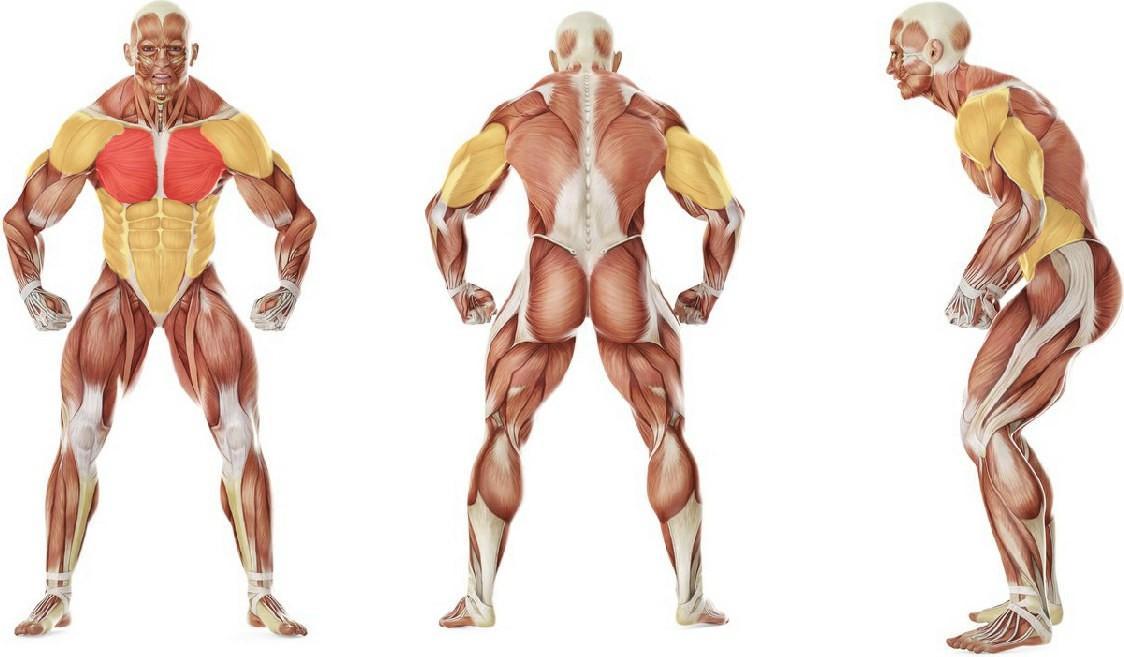 Какие мышцы работают в упражнении Поочередный жим гирь лежа на полу