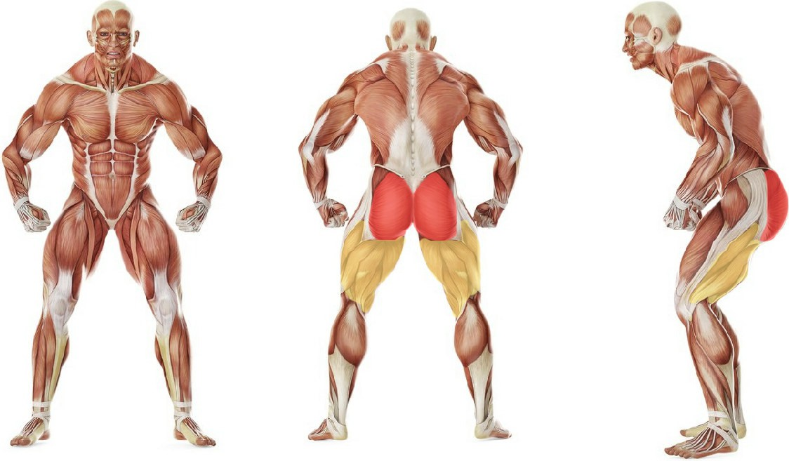 What muscles work in the exercise Butt Lift (Bridge)