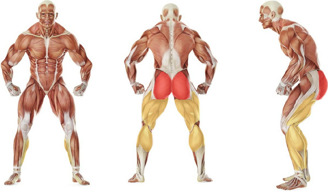 What muscles work in the exercise Barbell Glute Bridge