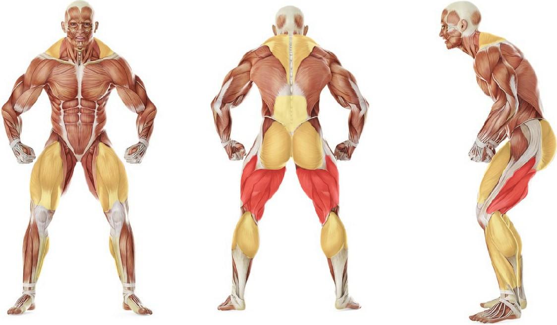 Какие мышцы работают в упражнении Подъем гири на грудь