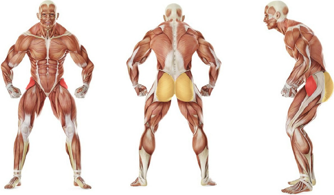 What muscles work in the exercise Thigh Abductor