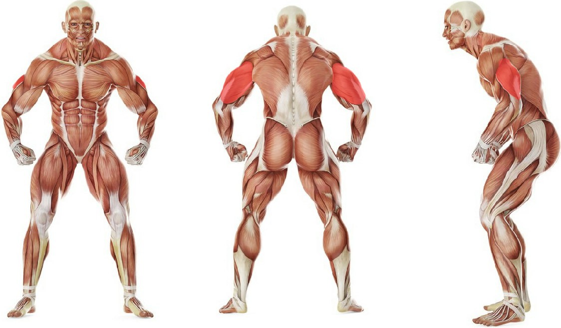 What muscles work in the exercise Standing Bent-Over Two-Arm Dumbbell Triceps Extension