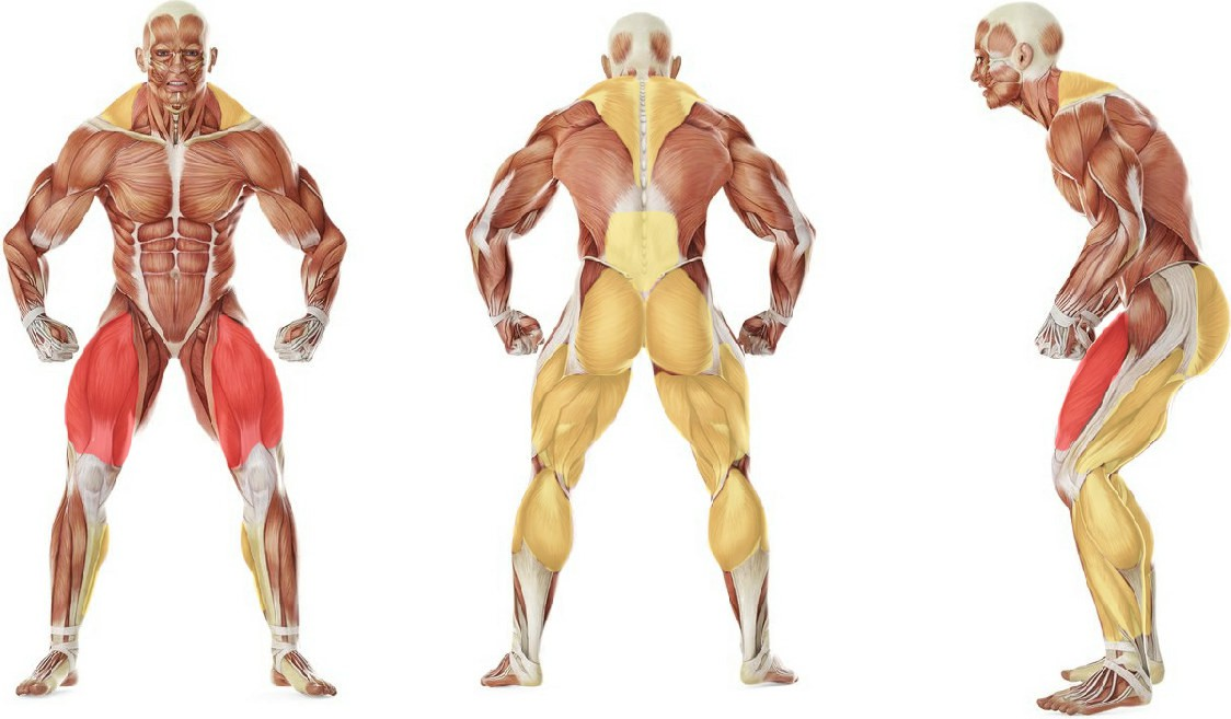 What muscles work in the exercise Jefferson Squats