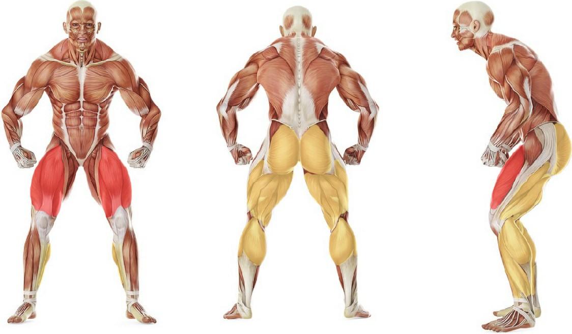 Какие мышцы работают в упражнении Приседания с отягощением