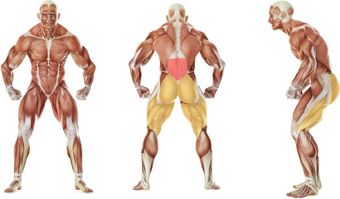 What muscles work in the exercise Partner Flat-Bench Back Extension