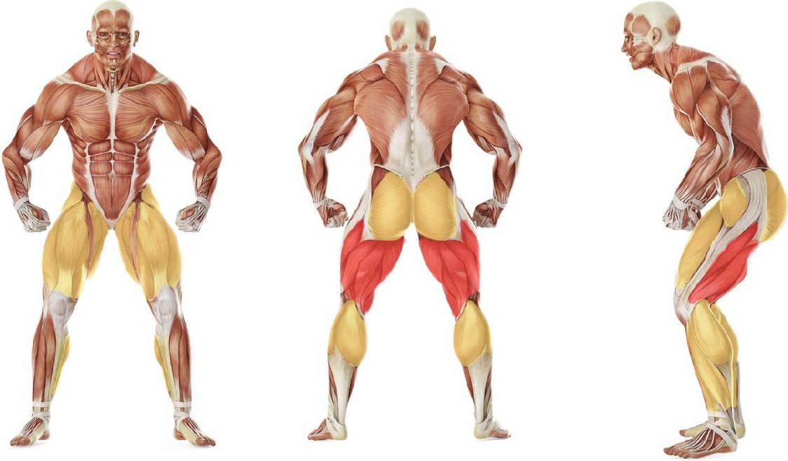 What muscles work in the exercise Прыжки на подставку
