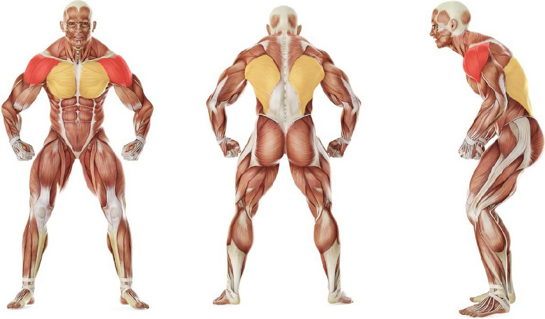 What muscles work in the exercise Upward Stretch