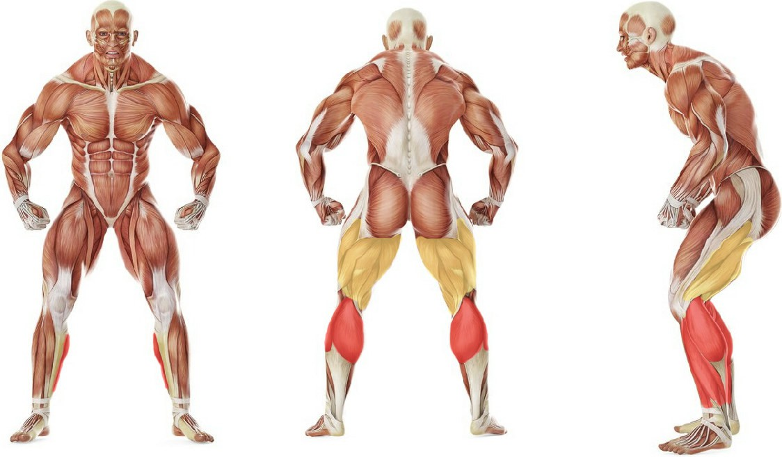 What muscles work in the exercise  Standing Gastrocnemius Calf Stretch