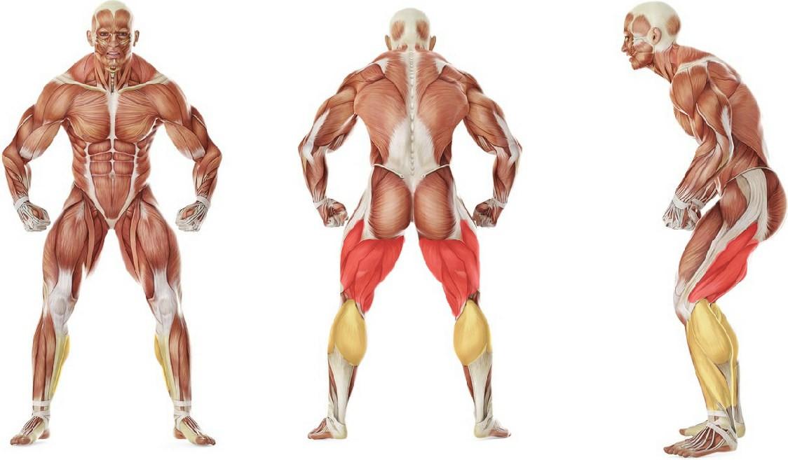 Какие мышцы работают в упражнении Растяжка мышц задней поверхности бедра сидя на полу