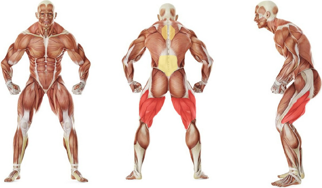 What muscles work in the exercise Upper Back-Leg Grab