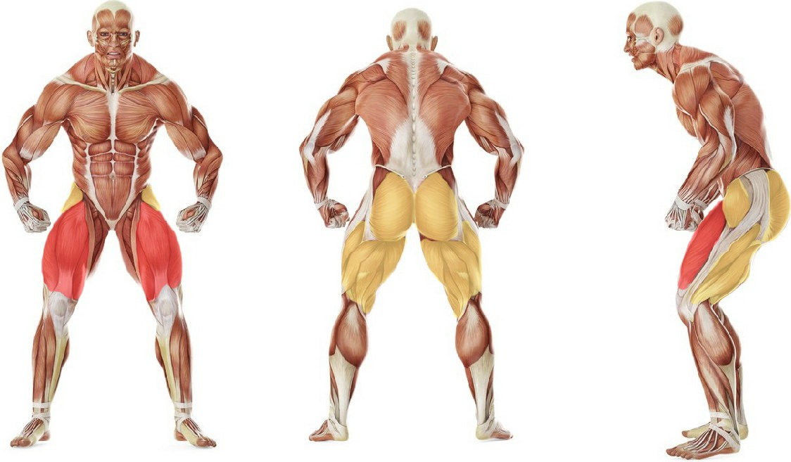 What muscles work in the exercise Sit Squats