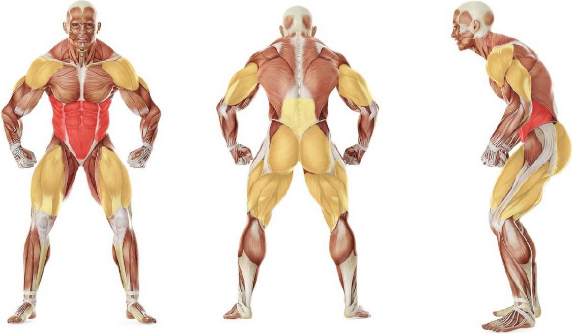 Какие мышцы работают в упражнении Жим гири в наклоне