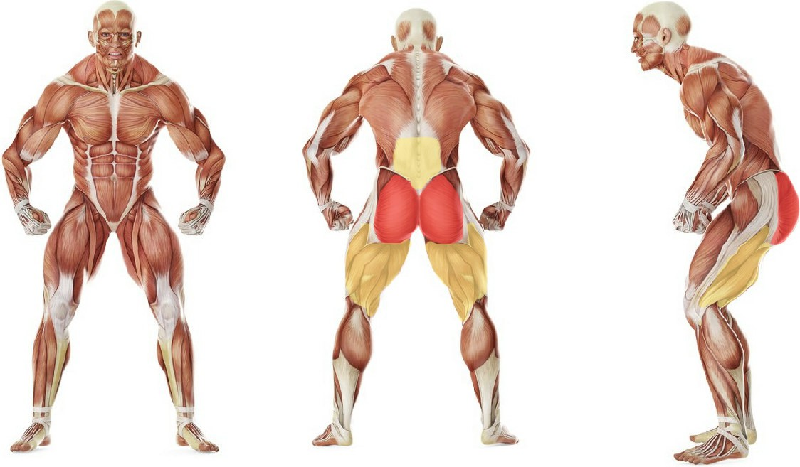 What muscles work in the exercise One Knee To Chest