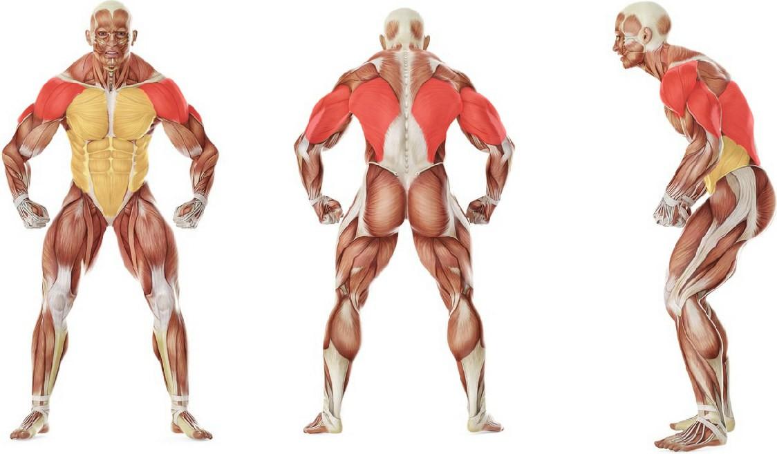 Какие мышцы работают в упражнении Баттерфляй