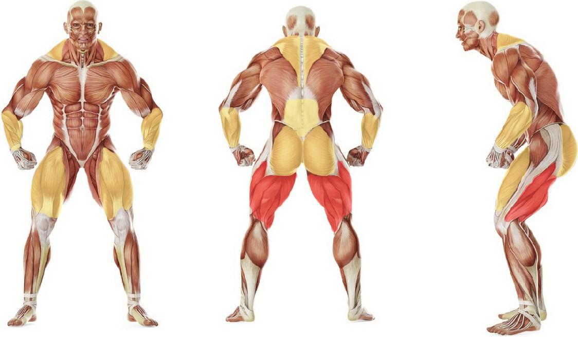 Какие мышцы работают в упражнении Рывковая становая тяга