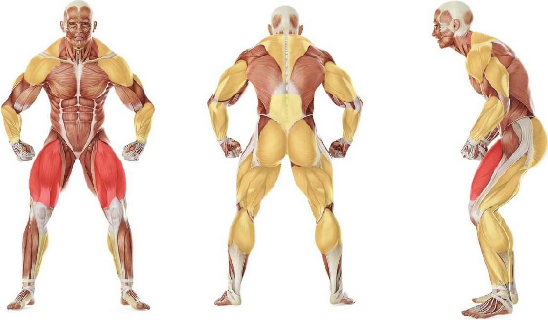 Какие мышцы работают в упражнении Рывок штанги с подставок