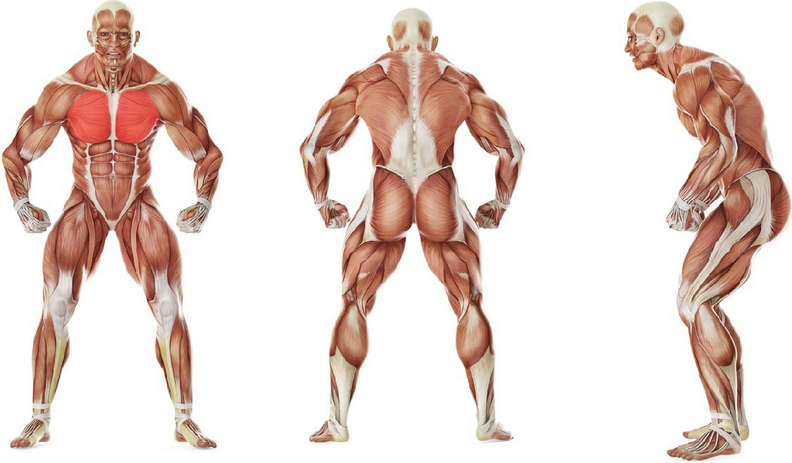 What muscles work in the exercise One-Arm Flat Bench Dumbbell Flye