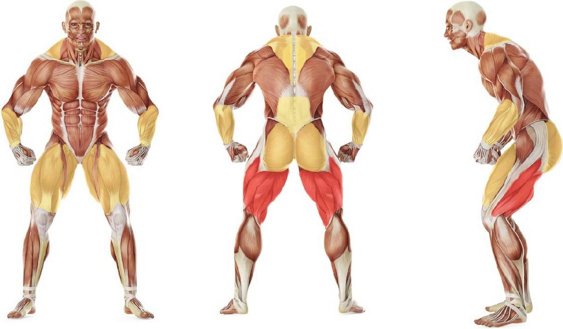 Какие мышцы работают в упражнении Становая тяга сумо