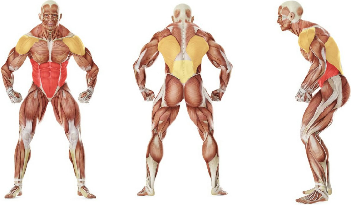 What muscles work in the exercise Barbell Ab Rollout