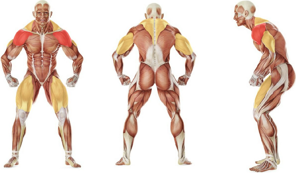 Какие мышцы работают в упражнении Толчок гирь над собой