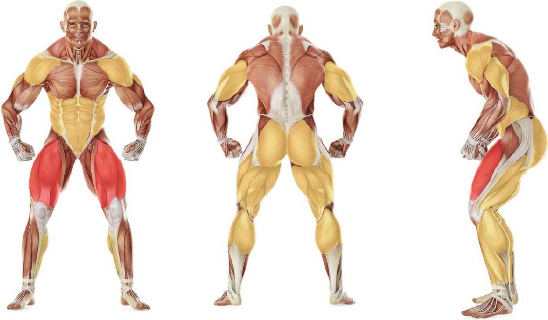 Какие мышцы работают в упражнении Толчок штанги от груди