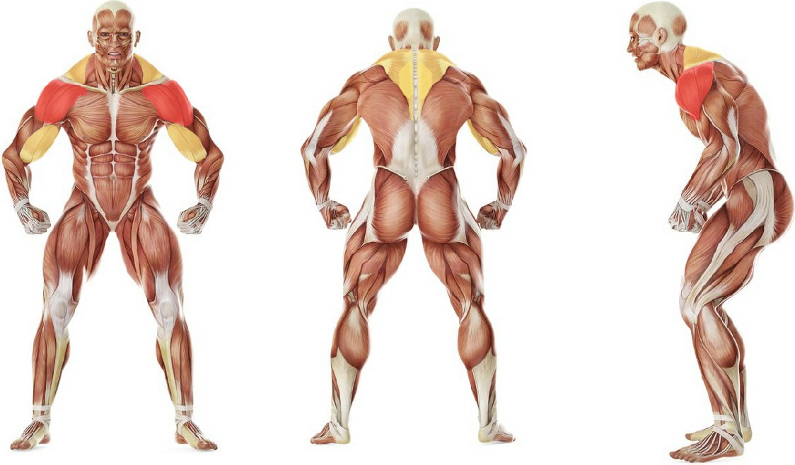 What muscles work in the exercise Low Pulley Row To Neck