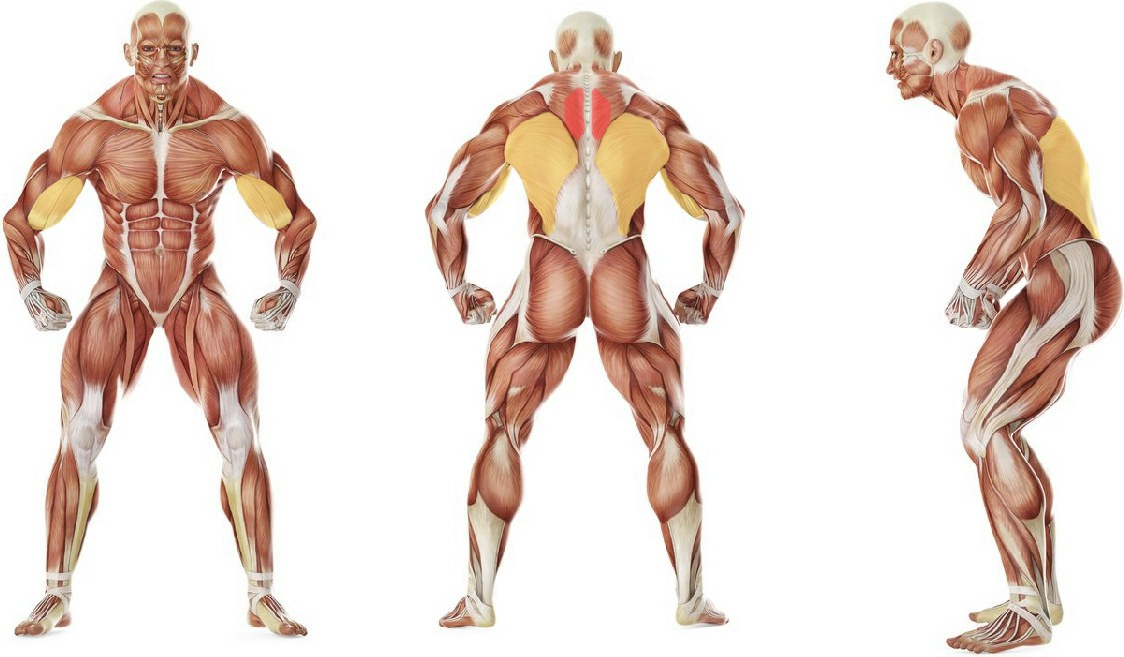 What muscles work in the exercise Bent Over Two-Arm Long Bar Row