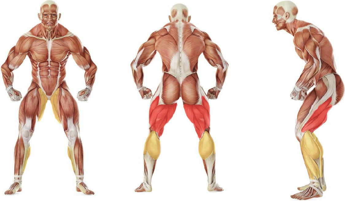 What muscles work in the exercise The Straddle
