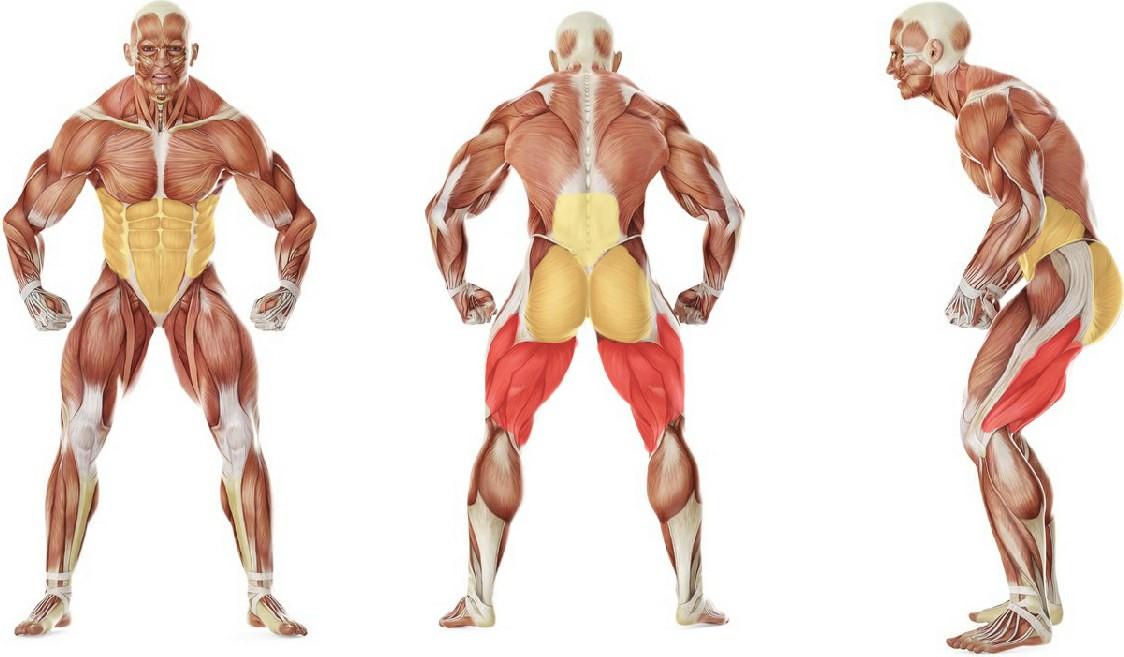 Какие мышцы работают в упражнении Упражнение «Доброе утро» с упоров