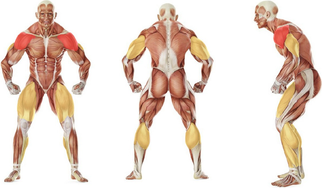 What muscles work in the exercise Push Press - Behind the Neck