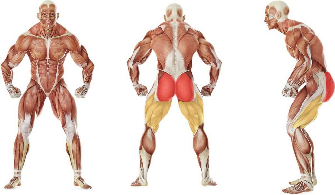 Какие мышцы работают в упражнении Махи ногой на нижнем блоке