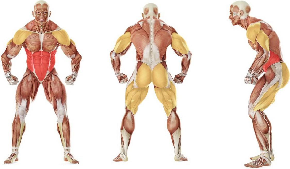 Какие мышцы работают в упражнении «Мельница» с одной гирей