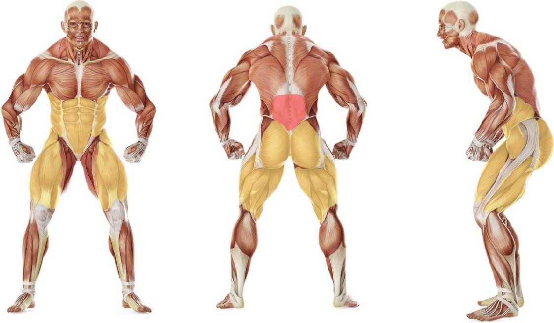 Какие мышцы работают в упражнении Растяжка с выпадом и поворотом