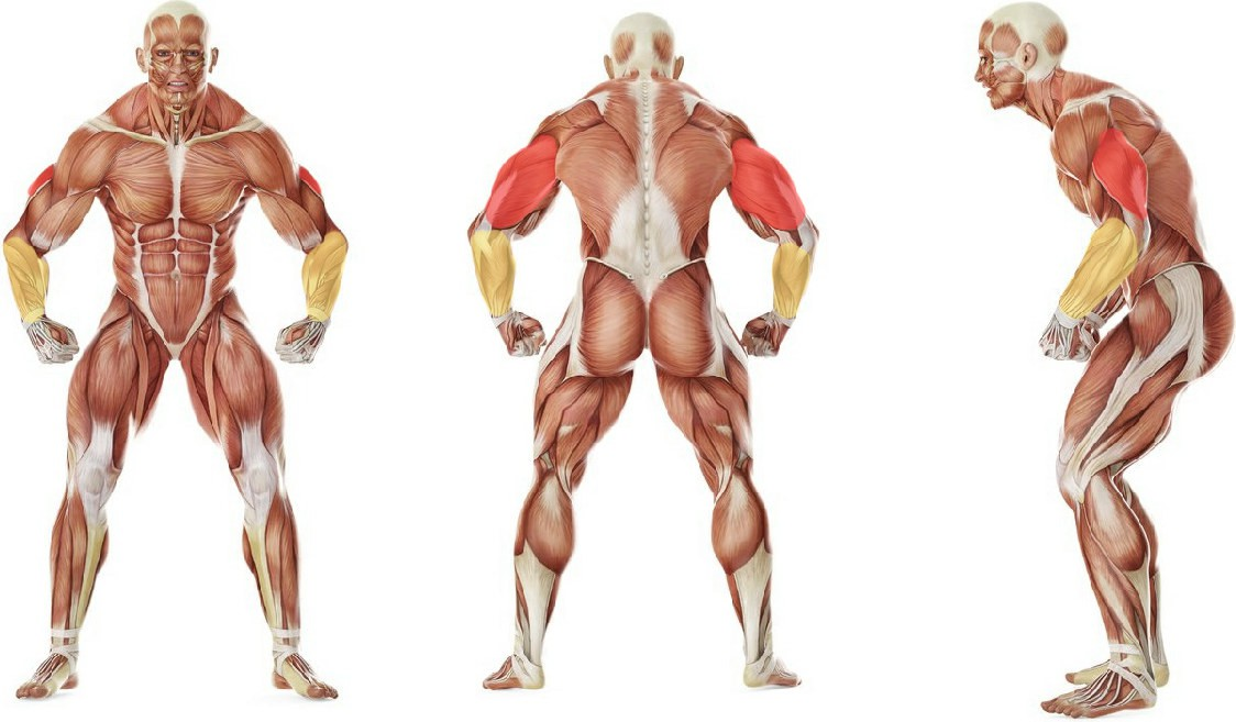 What muscles work in the exercise Cable One Arm Tricep Extension