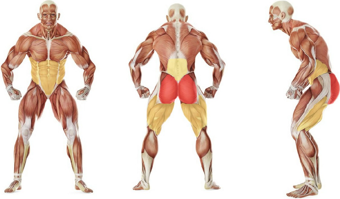 What muscles work in the exercise Kneeling Squat