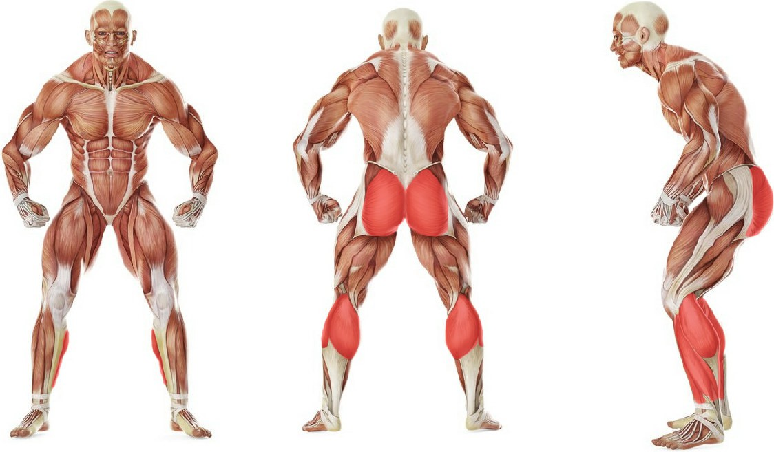 What muscles work in the exercise Прыжки с махом рук