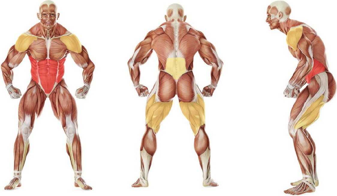What muscles work in the exercise Планка