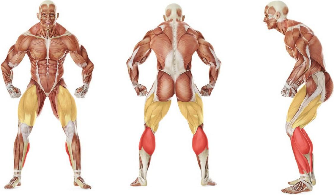 What muscles work in the exercise Бег на месте с высоким подниманием бедра