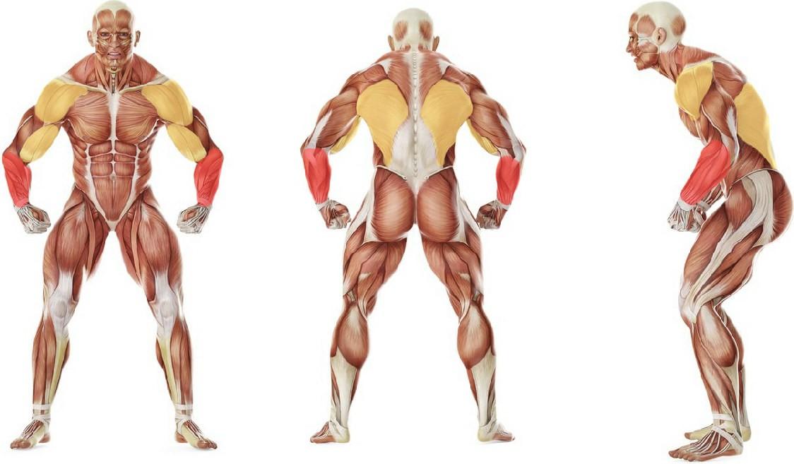 Какие мышцы работают в упражнении Вис на перекладине