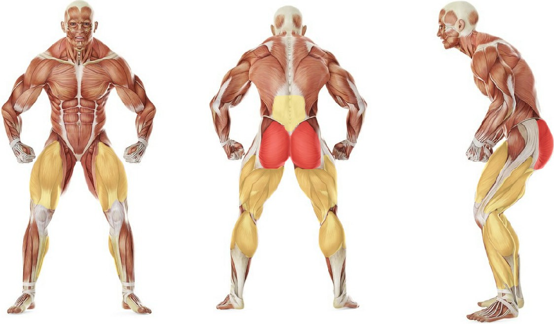 Какие мышцы работают в упражнении Женские приседания