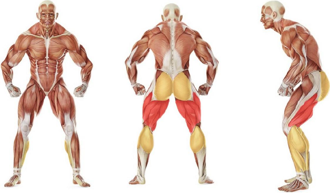 Какие мышцы работают в упражнении Обратная гиперэкстензия
