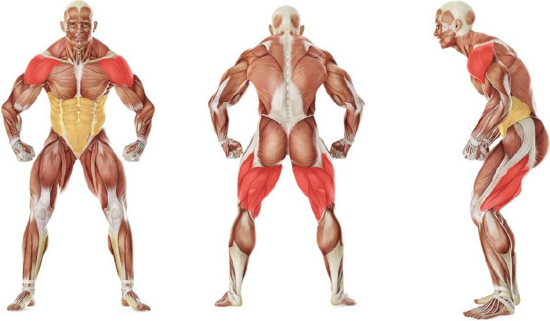 Какие мышцы работают в упражнении Каракатица