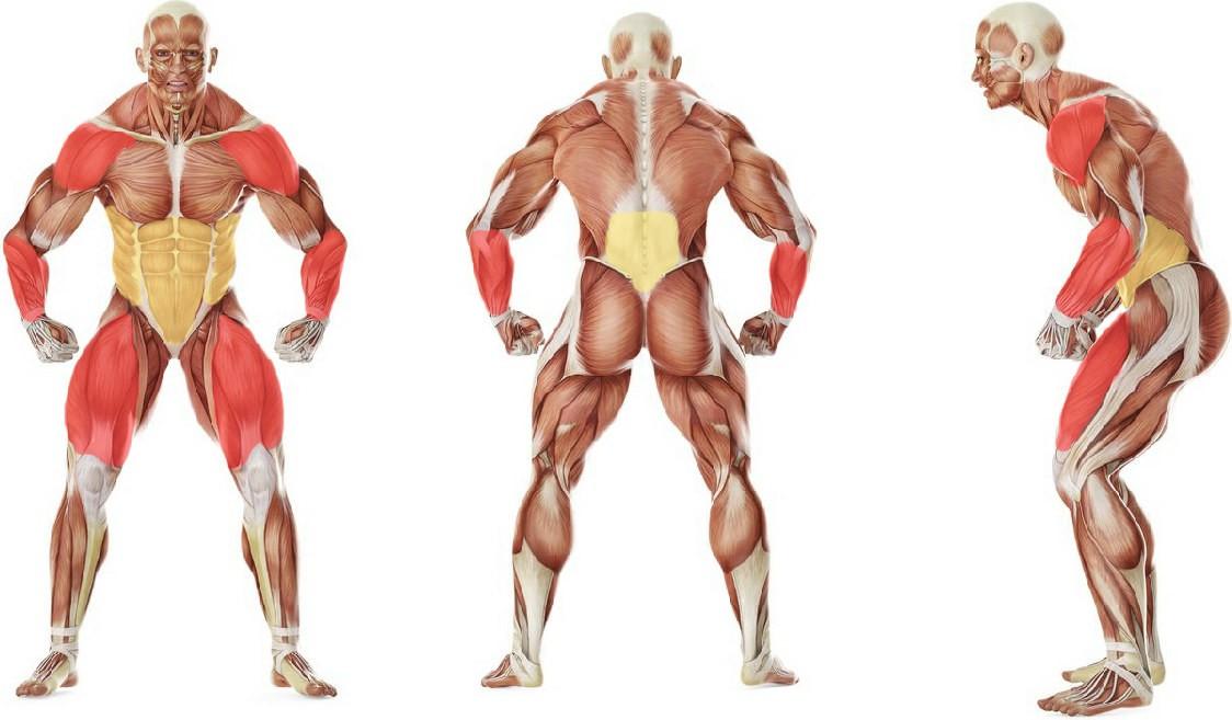 Какие мышцы работают в упражнении Паук